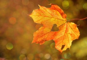 feuille automne